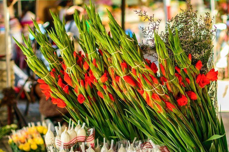 Vietnamese New Year | Flowers, Flower festival, Blossom
