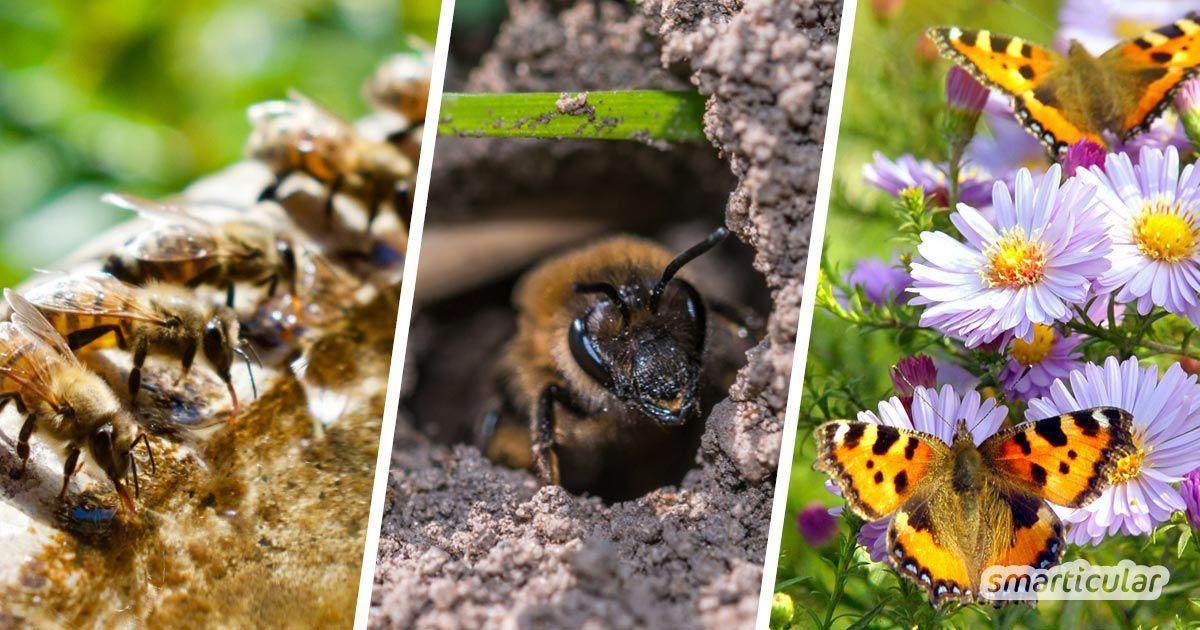 Insektenfreundlicher Garten: So unterstützt du Bienen, Hummeln und Co.