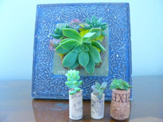 Succulent Living Wall Art Picture Frame By BellasJardin 4500
