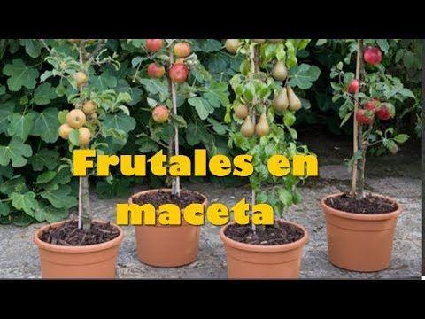 Como hacer un increible arbol crecer muy rapido y dar frutas el