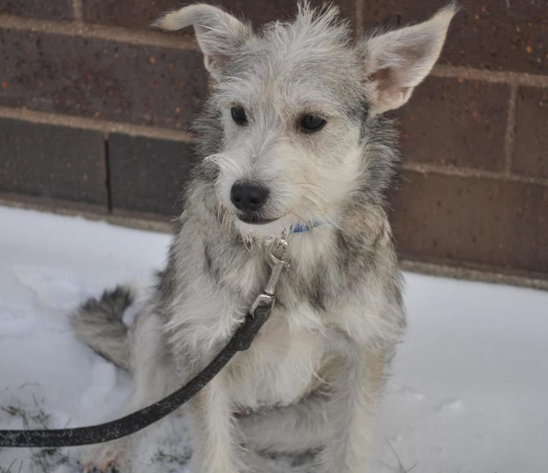 Adopt Pembrook On Petfinder Rescue Dogs Fluffy Dogs Dogs