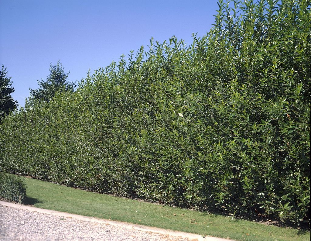 Fastest Growing Trees Will Add Instant Beauty To Your Landscape ...