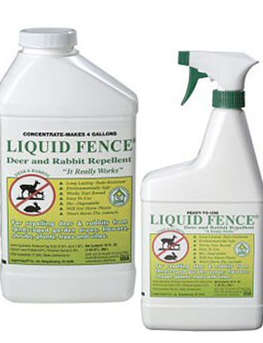 Liquid Fence Non Toxic Deer And Rabbit Repellent Great Stuff Really Works Stinks Like Heck When You First Sp Deer Repellant Rabbit Repellent Garden Pests