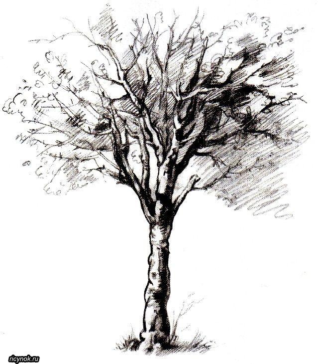дерево рисунок графика трудно