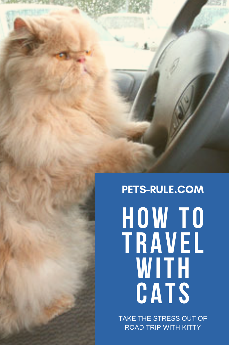 Kitty Travels What To Do Before Traveling Long Distance With A