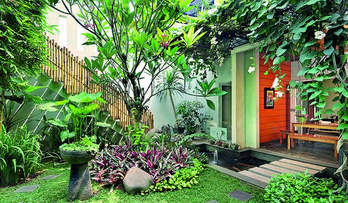 taman tropis di belakang rumah