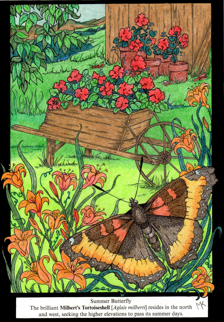 Marion Kelsey 18 Division From Butterfly Alphabet Coloring Book Dover Coloring Pages Coloring Contest Coloring Books