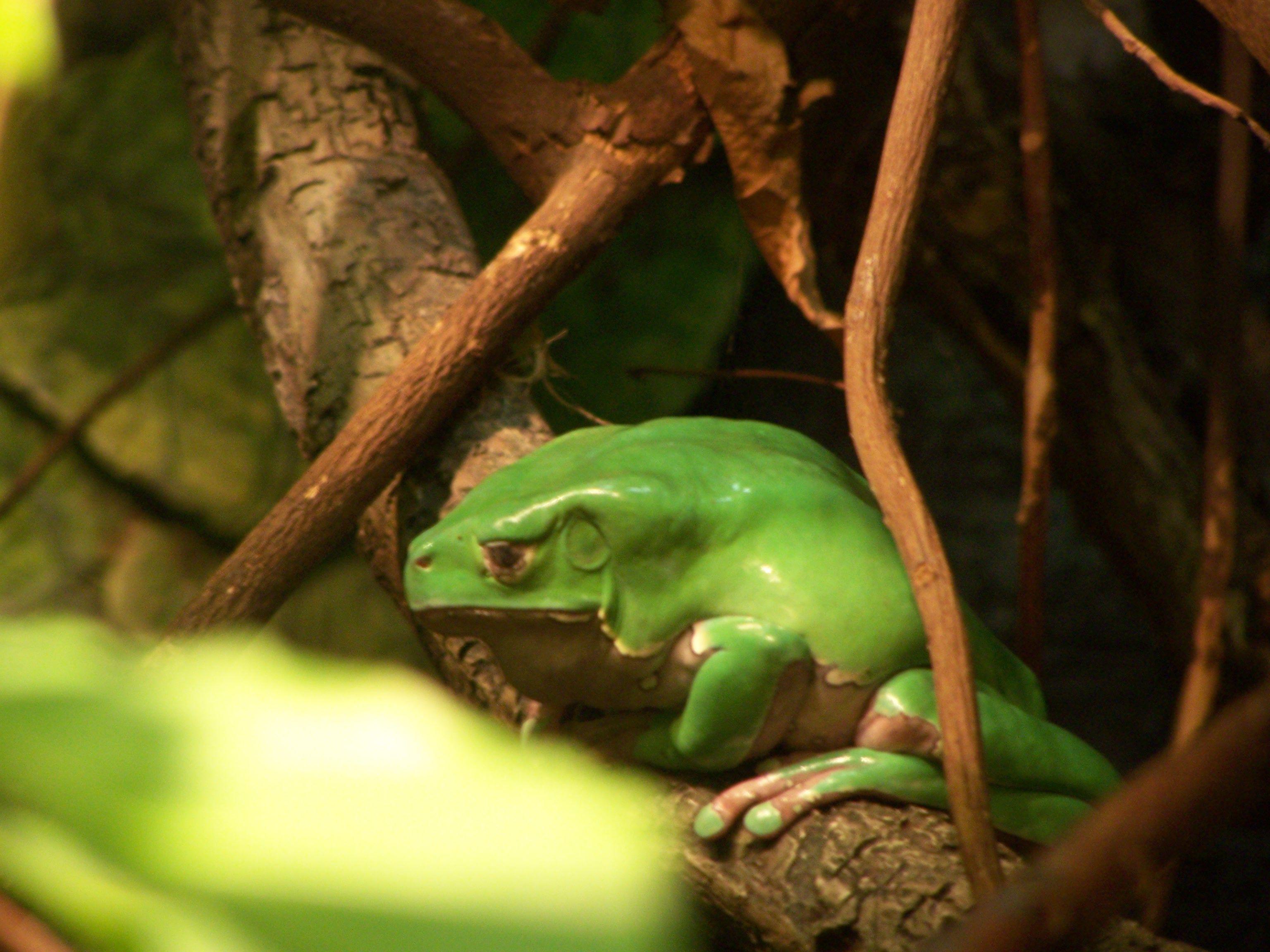 Aquarium Frog | Pictures | Pinterest | Frogs and Aquariums