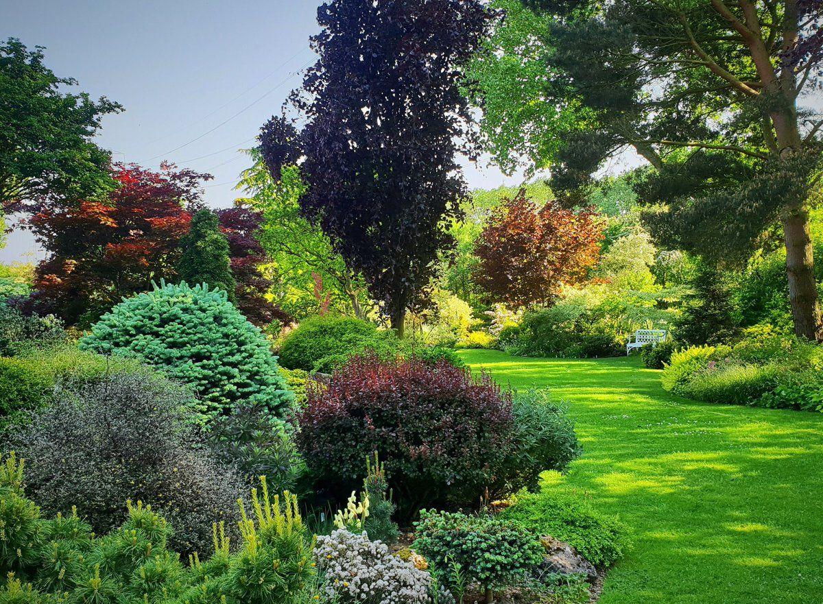 Beautiful Foliage No Flowers Buy Plants Online Buy Plants