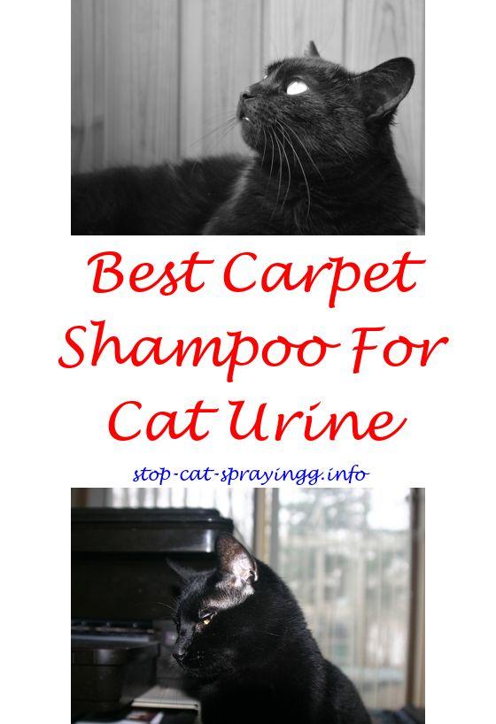 Can cats spray if neutered.Raid flea carpet and room spray cats.Flea spray safe for cats - How To Stop Cat Spraying?. 9440247675 #CatSprayingOdorRemoval