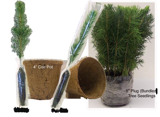 Tree Seedlings Coir Pots