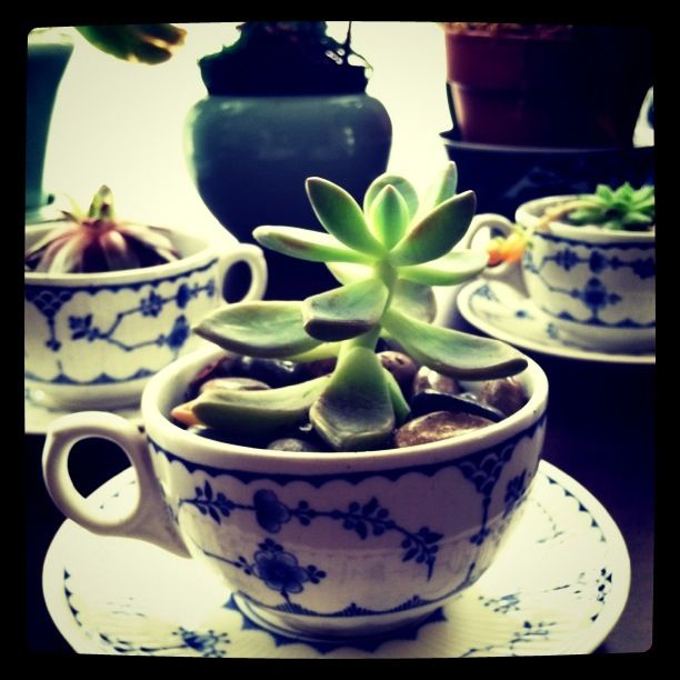 tea cup succulents! -- I want to do think with my great grandmother's depression era teacups...I really don't want them sitting in a box.
