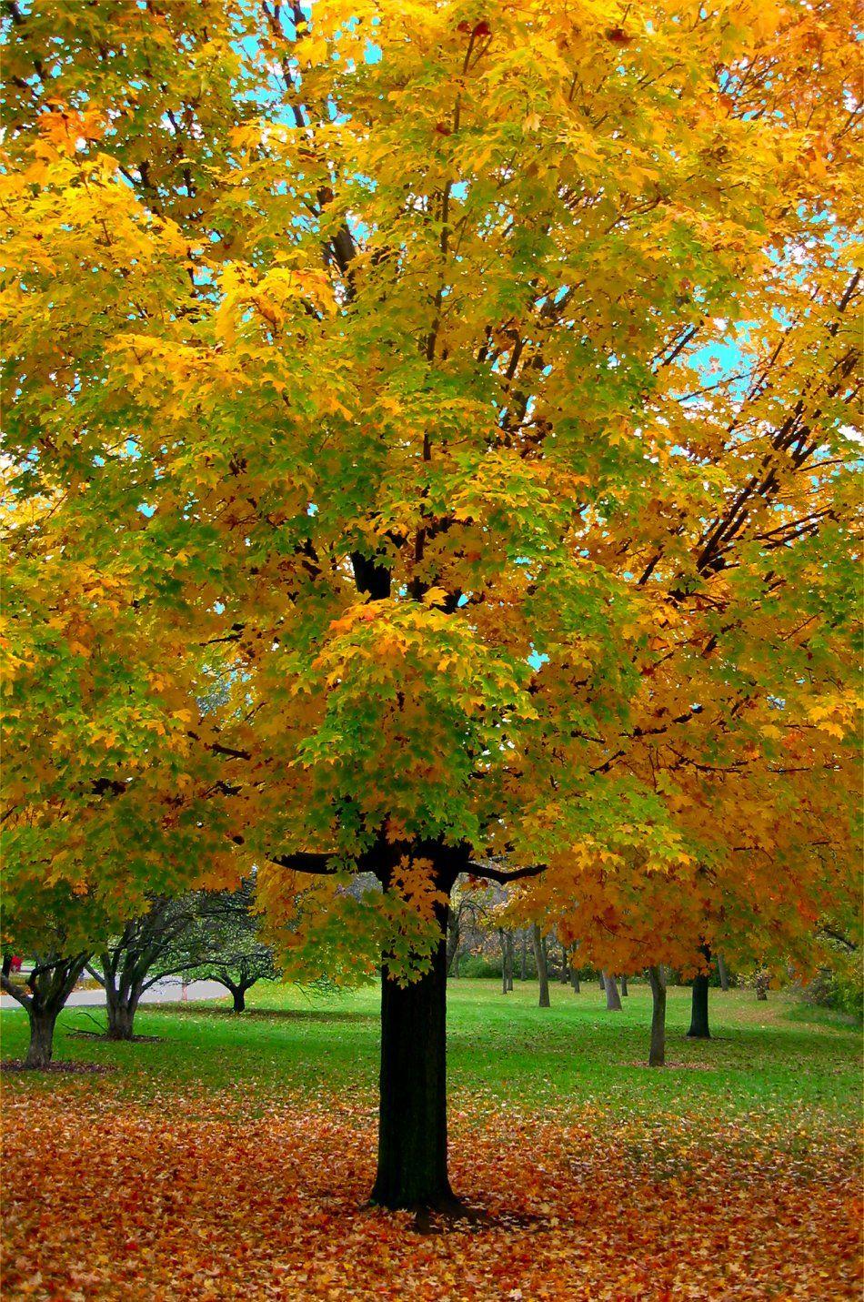 ✯ Wiconsin Autumn