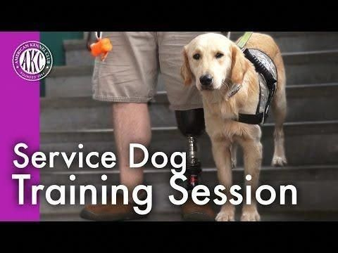 Noble Computed How To Train Your Dog Your Domain Name Training