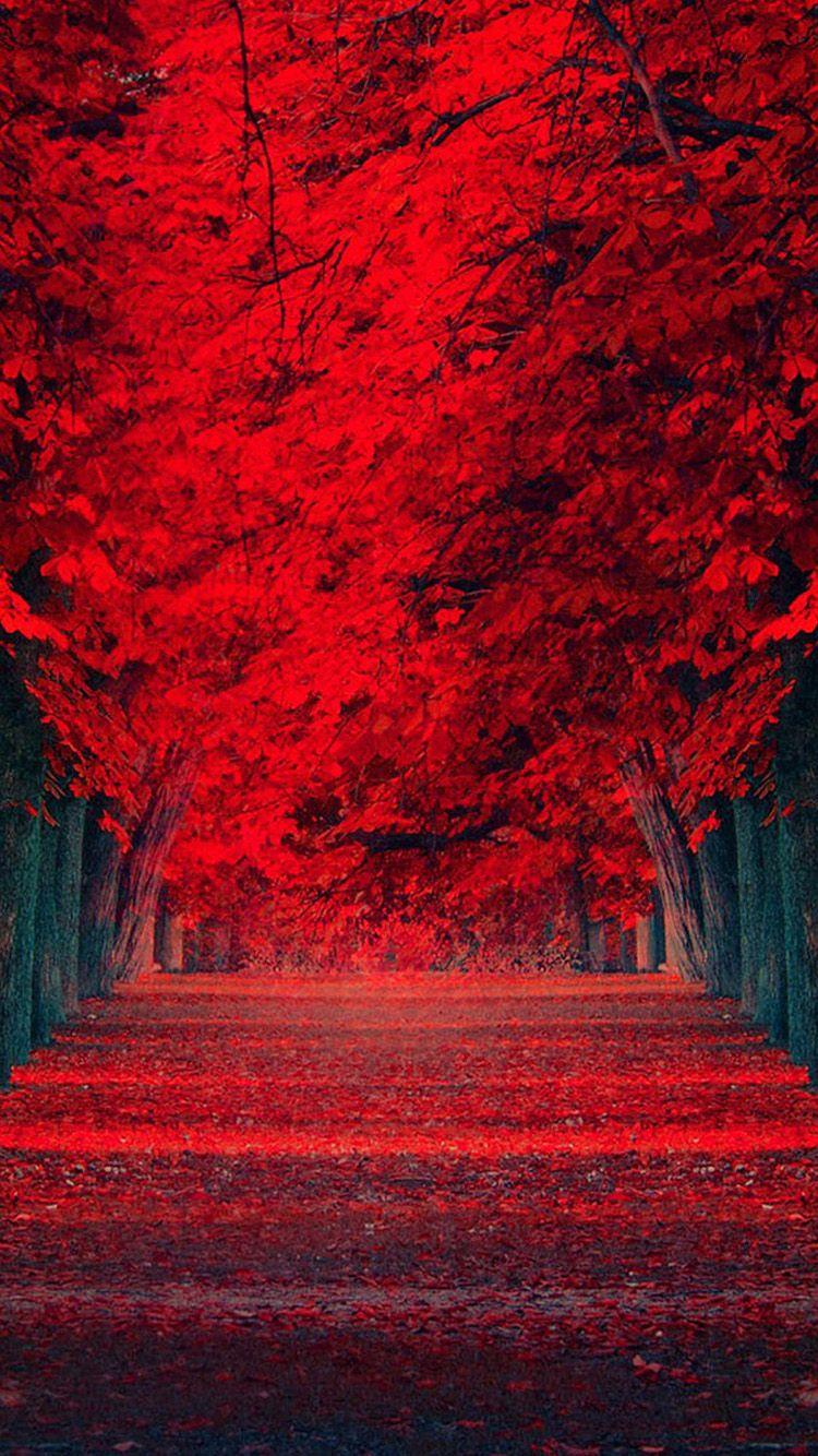 Pin By De Fernandez On Z Red N Black Beautiful Nature Wallpaper Autumn Scenery Red Tree