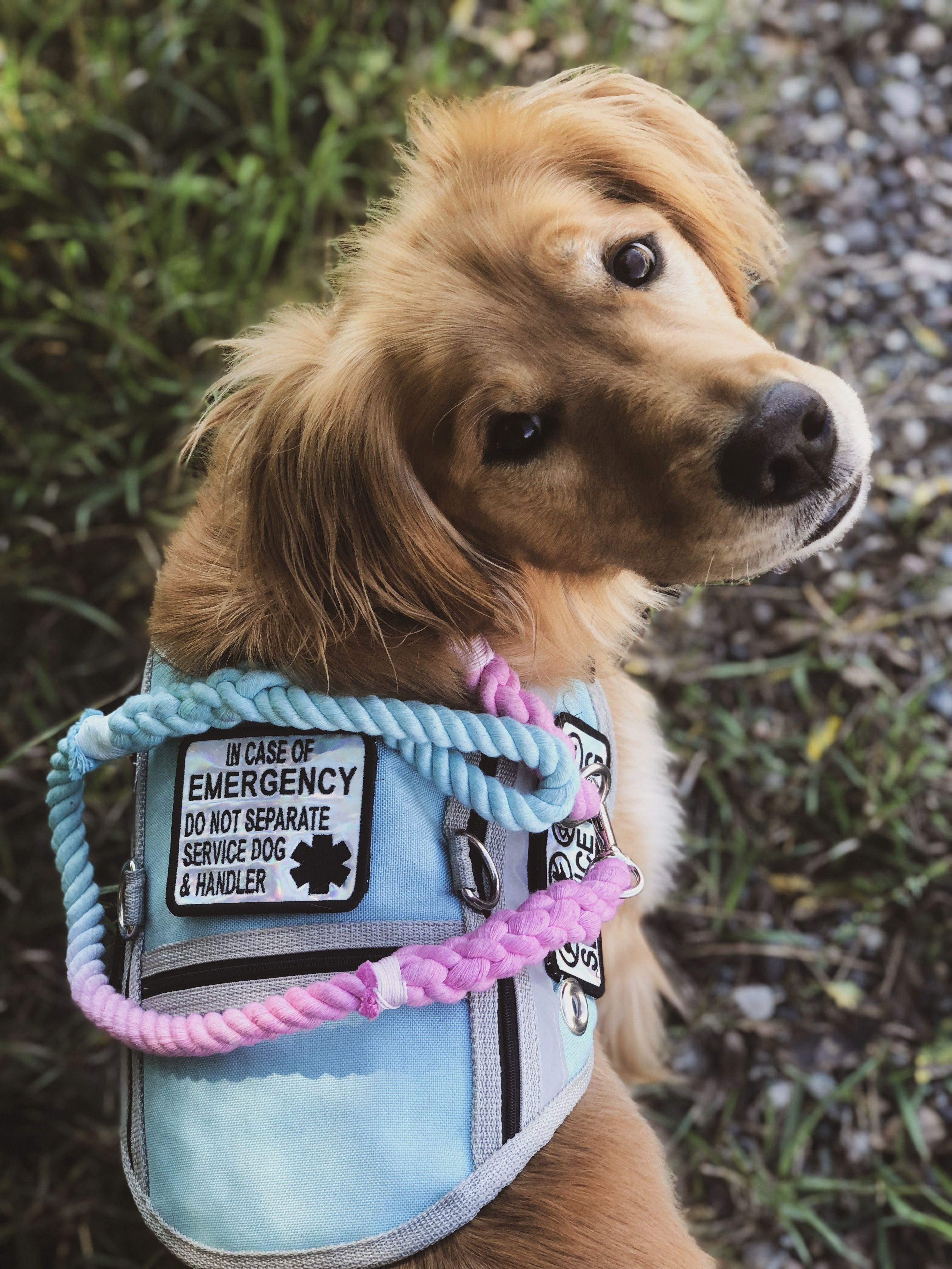 Service Dogs Image By Hannahniah Service Dogs Gear Psychiatric