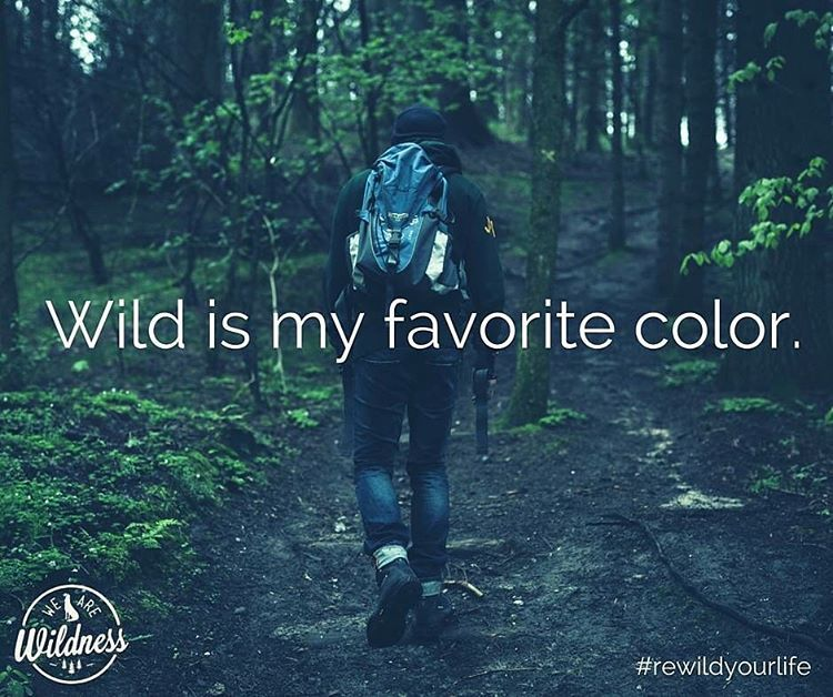 See this Instagram photo by @wearewildness • 826 likes