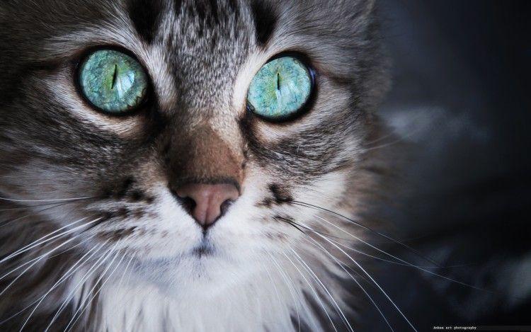 Fonds D Ecran Animaux Fonds D Ecran Chats Chatons Details D Un Regard Par Ankaa Hebus Com Animaux Animales Chats Et Chatons