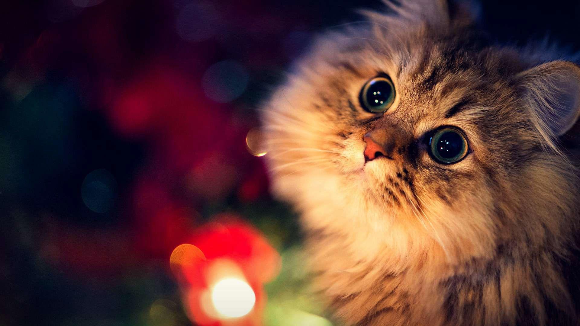 61 Christmas Cat Wallpapers On Wallpaperplay Sevimli Kediler Kedi