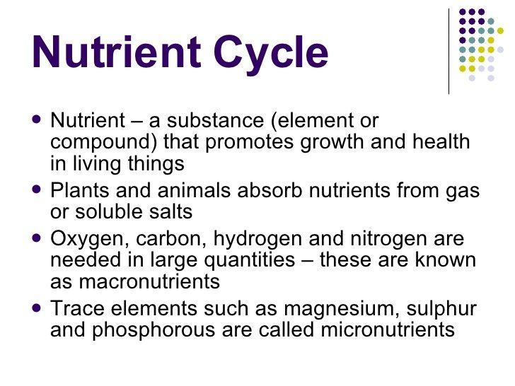 Nutrient Cycles Worksheet - Worksheets