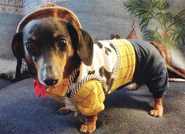 25 Photos Of Dogs Dressed As Disney Characters Because You Deserve It Disney Characters Dogs Pet Toys Disney Dogs