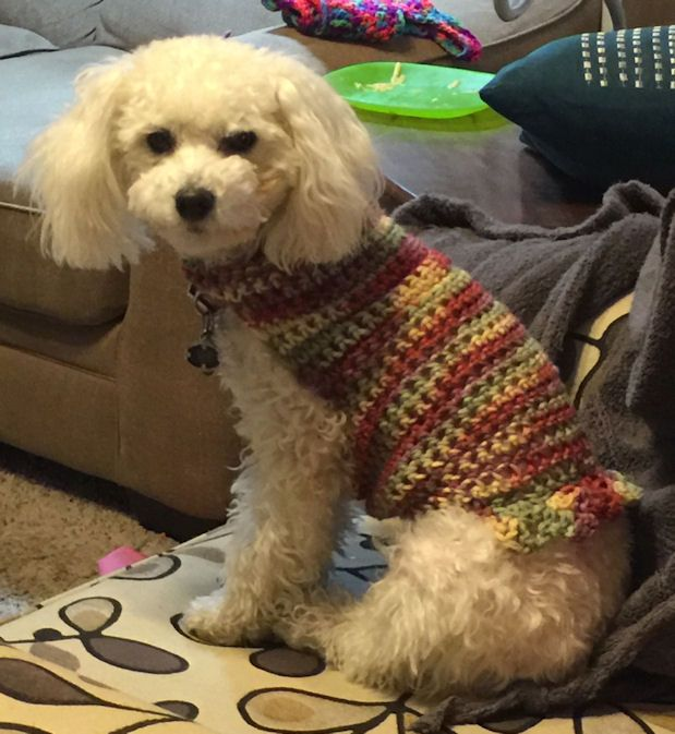 Dog Sweater Free Crochet Pattern Courtesy of Crochet N More | dog ...
