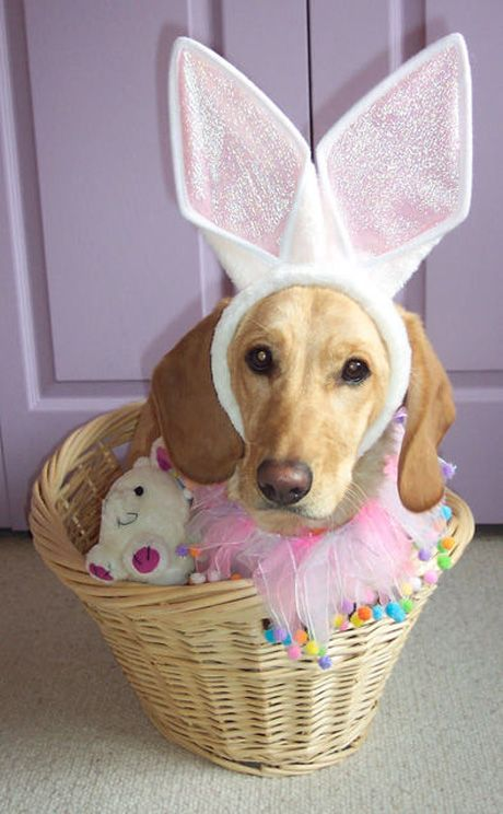Easter Funny Dog My What Big Ears You Have From Pupalooza Easter Dog Pet Holiday Dog Birthday
