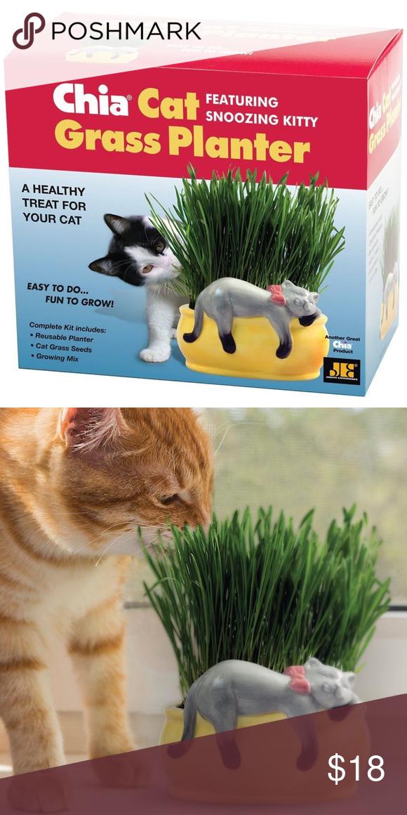 Chia Pet Cat Grass Planter Pet Treat Plant Nwt Chia Pet Cat