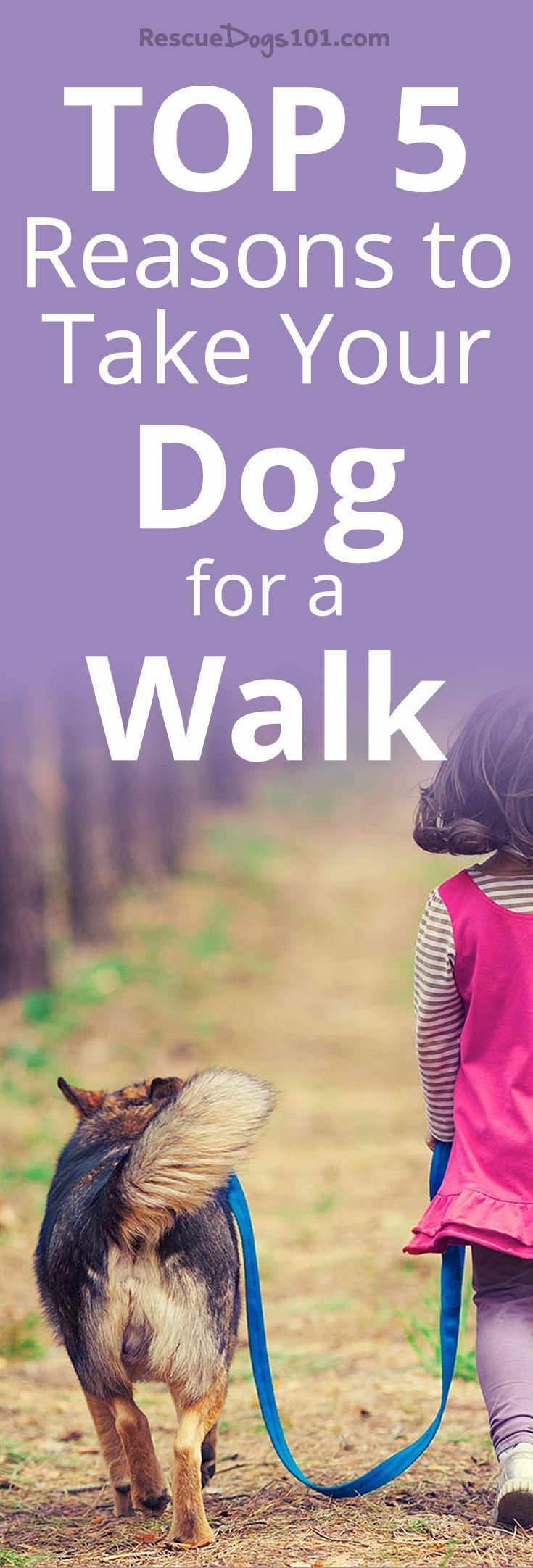 5 reasons to take your dog for a walk dogwalking dog