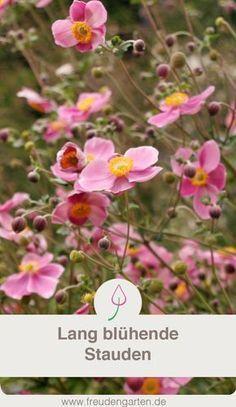 Photo of Die 8 schönsten Dauerblüher für den Garten