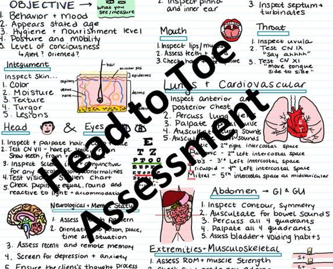 Head to Toe Assessment Guide Nursing school notes