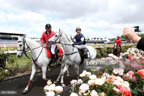 MELBOURNE, AUSTRALIA - NOVEMBER 05: Katelyn Mallyon rides Little... #petrovskoyeru2: MELBOURNE, AUSTRALIA - NOVEMBER 05:… #petrovskoyeru2