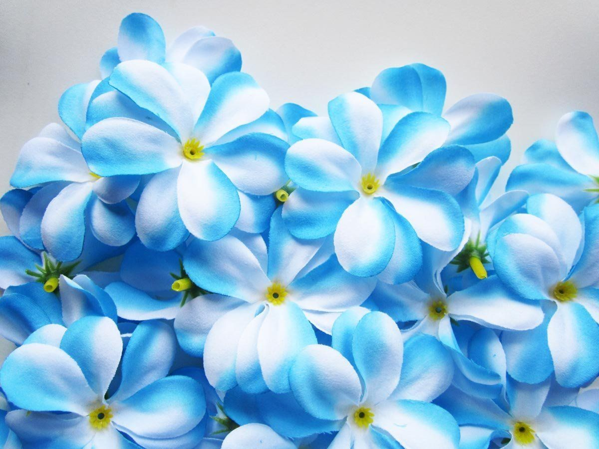 100 Blue White Hawaiian Plumeria Frangipani Silk Flower Heads 3