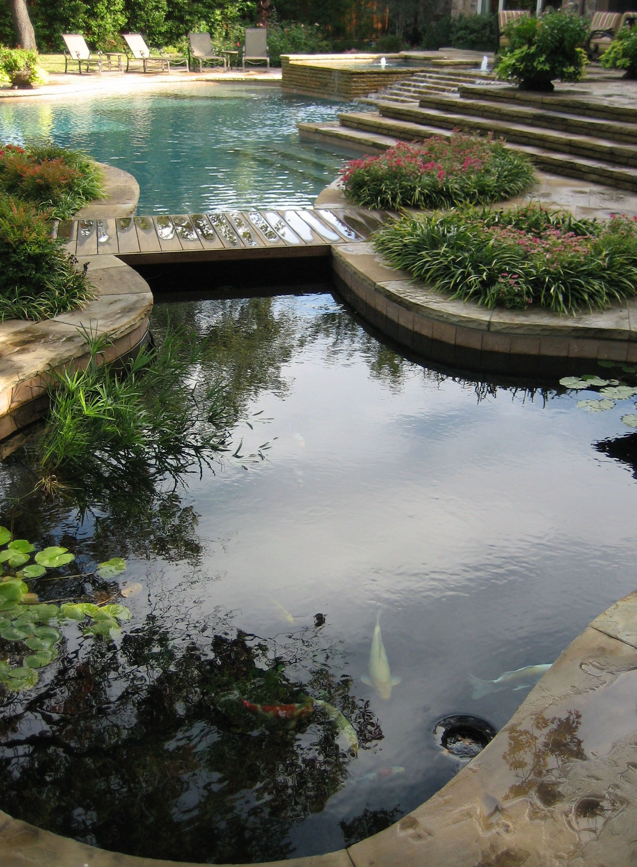 Koi pond and pool design with hidden barrier underneath for Koi fish in pool