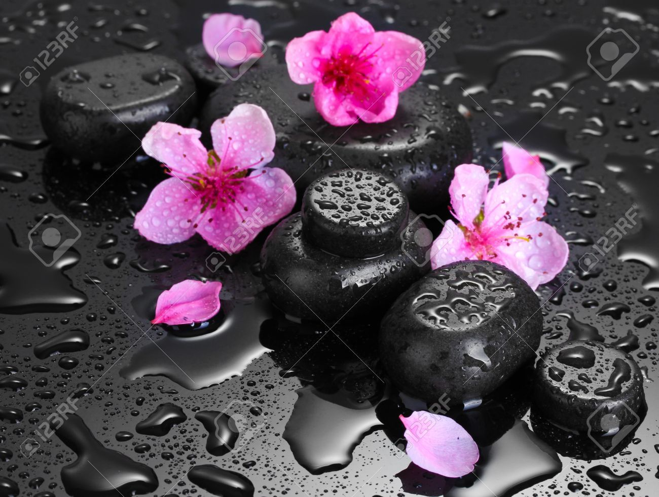 Splash images color splash color pop gray background photo manipulation black