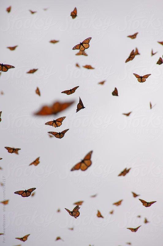 Swarming Monarch Butterflies By Per Swantesson Aesthetic Iphone Wallpaper Butterfly Wallpaper Monarch Butterfly