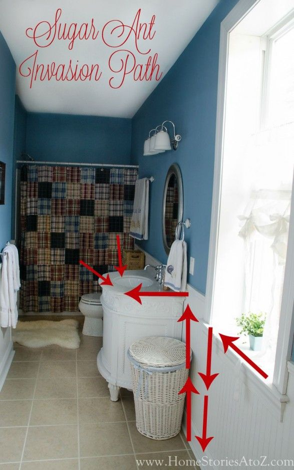 Mom Saves The Day From Sugar Ant Invasion Sugar Ants Ants Bathroom Redo