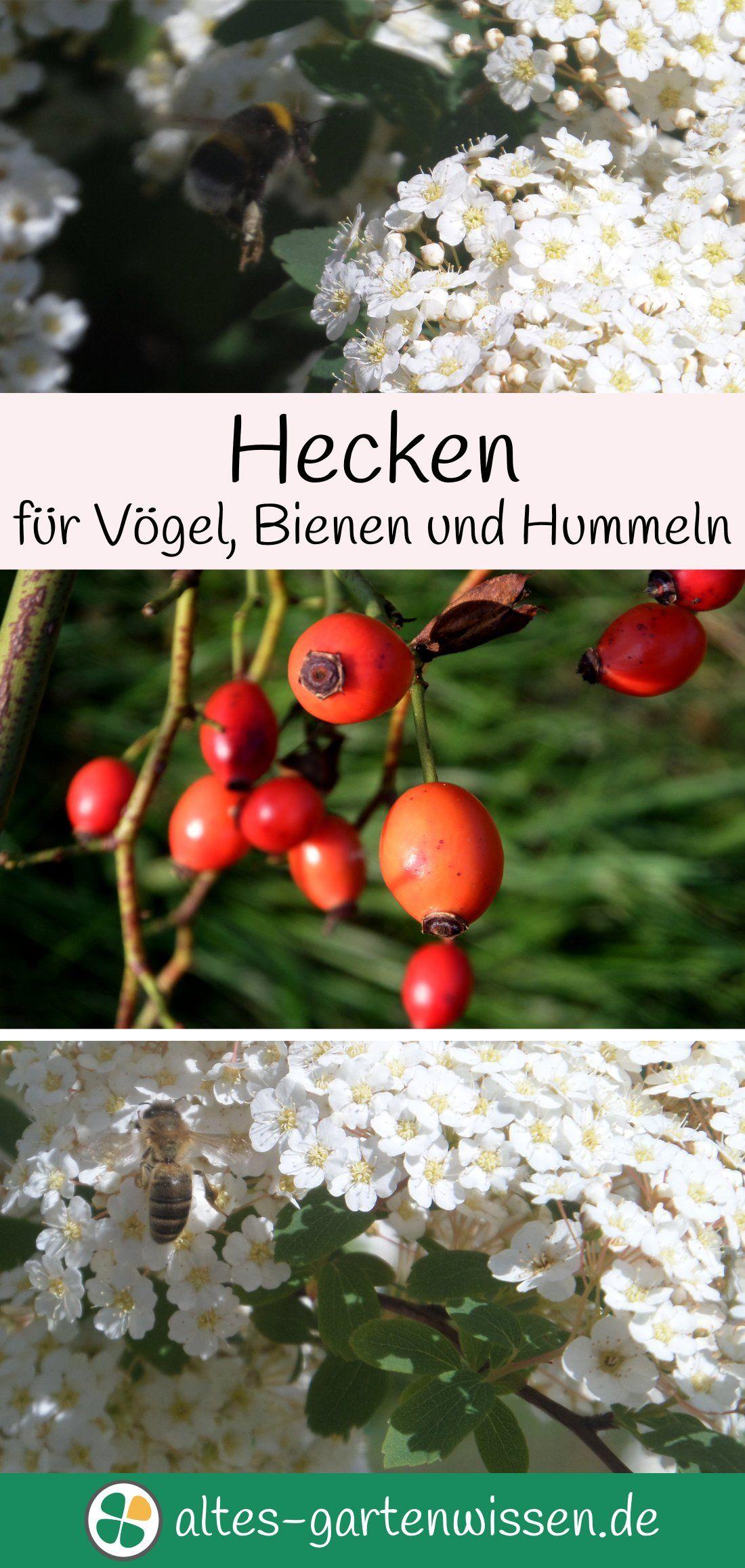 Eine Hecke pflanzen Hecken für Vögel, Bienen und Hummeln