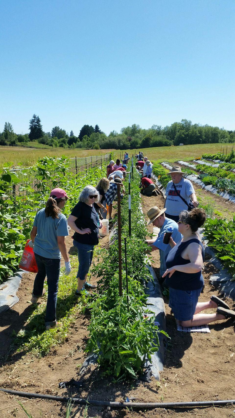 Homes and gardens events around Portland Plant walks