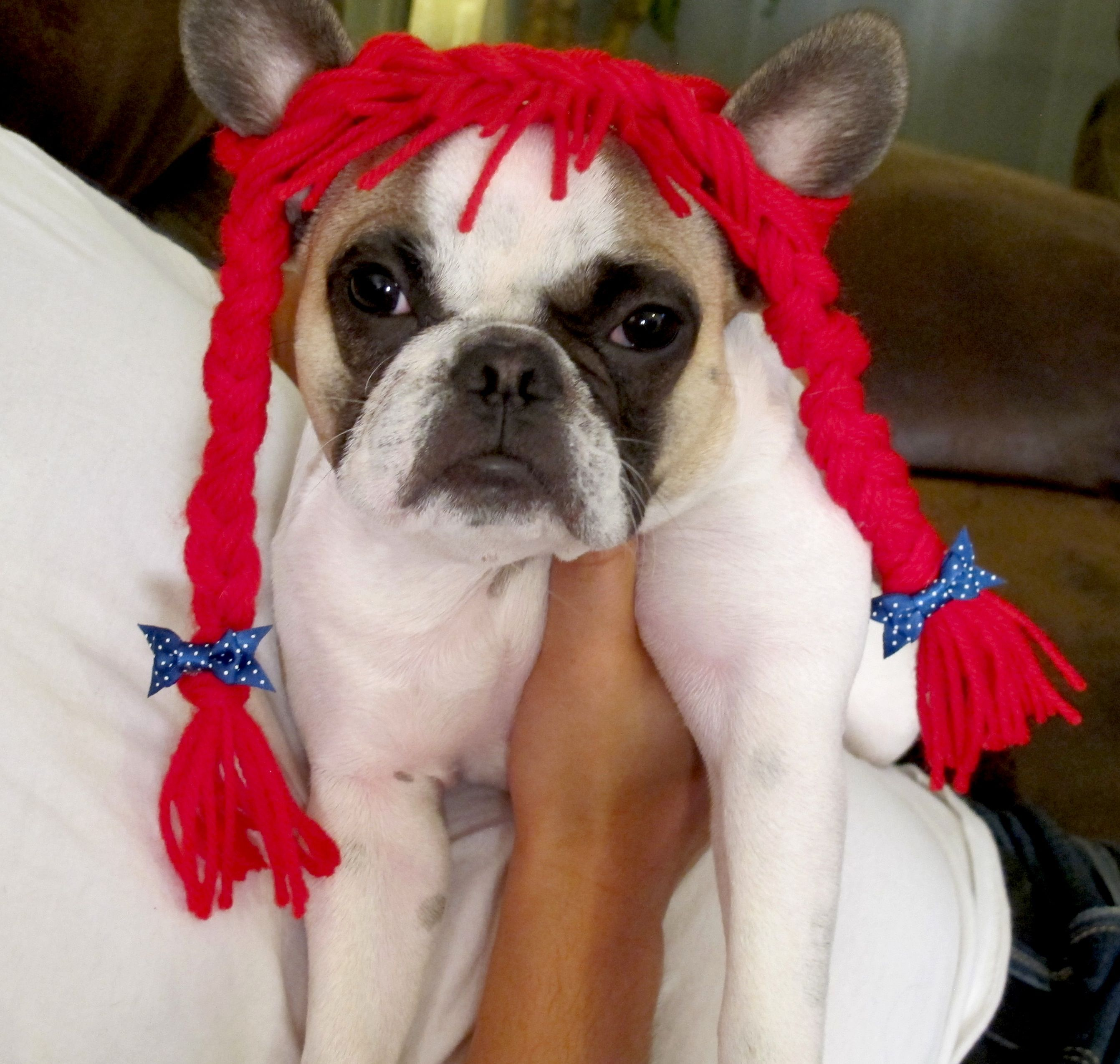 DIY Dog Costumes for Halloween! Raggedy Ann made out of ...