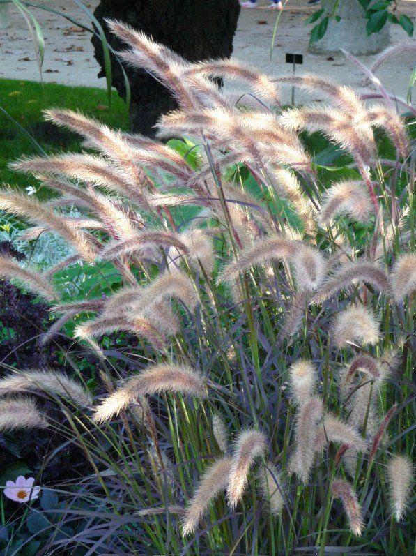 L 39 automne va si bien aux gramin es jardins jardins - Jardin de graminees photos ...