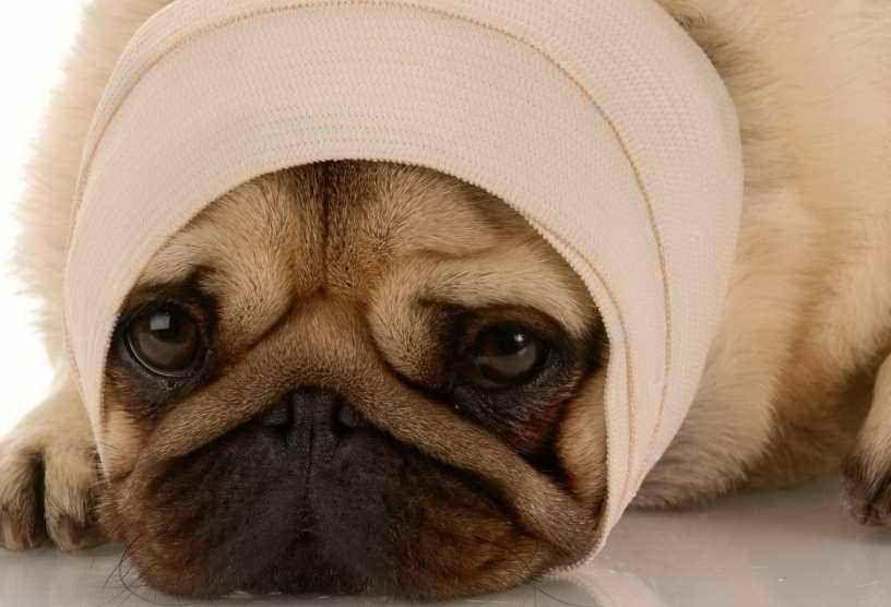 Meningitis in dogs symptoms