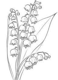 Znalezione Obrazy Dla Zapytania Jak Narysowac Konwalie Flower Sketches Flower Line Drawings Flower Drawing