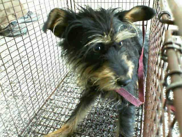 HAS LESS SHARES + VERY URGENT!  #A469672 Release date: 7/30  I am a male, black and brown Terrier mix. Shelter staff think I am about 1 year old. I have been at the shelter since Jul 23, 2014   PETHARBOR: http://www.petharbor.com/pet.asp?uaid=SBCT.A469672 ...     City of San Bernardino Animal Control-Shelter. https://www.facebook.com/photo.php?fbid=10203141456794861&set=a.10201187177339096.1073741865.1160364024&type=3&theater