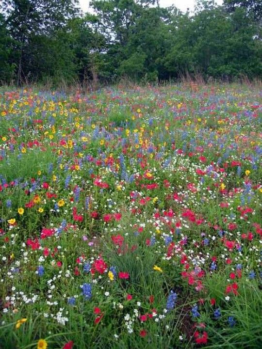 Texas Wildflowers, late October to mid November is the