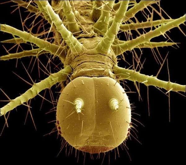Cringe Worthy Cricket Captures Scanning Electron Microscope Electron Microscope Pictures Of Insects