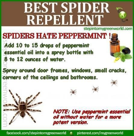 Healthy Living Diy Peppermint Spider Repellent Spiders