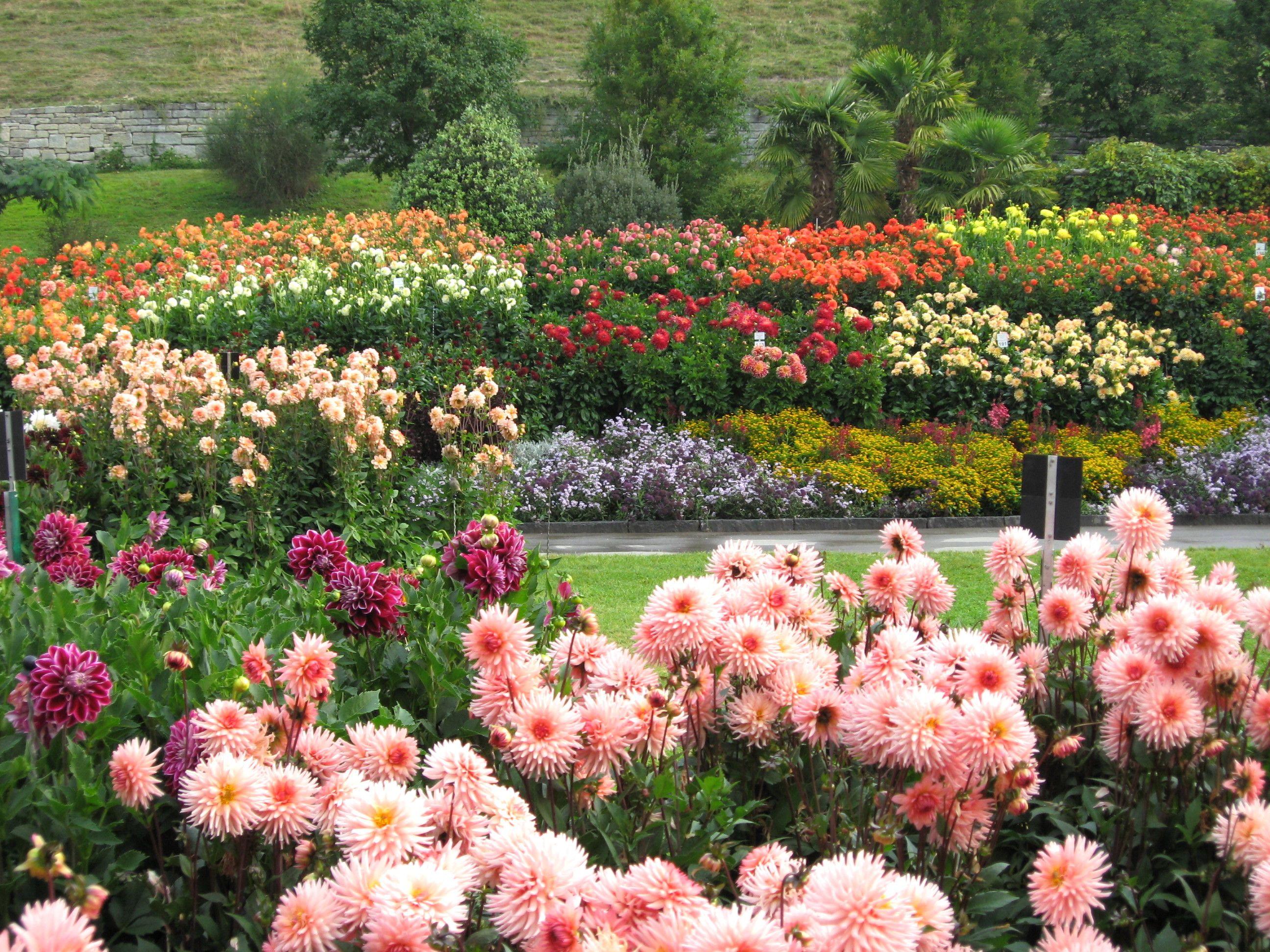 Dahlienblute Hauptblute Jetzt Floral Wreath Island Vacation