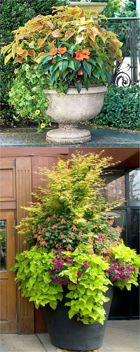 Container Plants For Shade Porch Inspired By The Forest