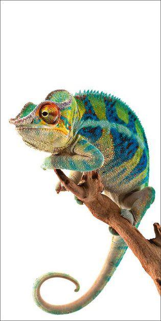 Pin De Mariana Motta En Animales Pinturas De Animales Animales Exoticos Reptiles